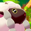 Wooloo's Avatar