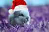 fluffy rabbit's Avatar